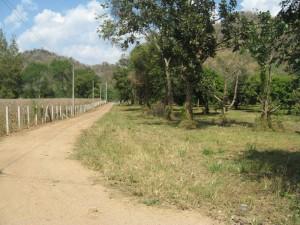 ที่ดิน 35 ไร่ ติดถนนลาดยาง แยกจากธนะรัตช์ 200 เมตร ก่อนจะถึงโรงแรมจุลดิส-ปาลิโอ รวมต้นไม้ผลหลายชนิดเกือบเต็มพื้นที่