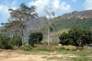 ที่ดินบนถนนธนะรัตช์ 4 ไร่ ทำเลดี  วิวเทือกเขาใหญ่ห่างจากด่านขึ้นอุทยานเพียง 7 กม.