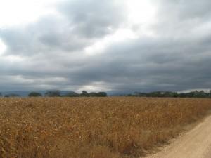 ที่ดิน 35 ไร่ พื้นที่เป็นเนินหลังเต่าแผ่กว้างๆ ติดถนนหน้ากว้าง