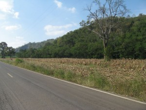 ที่ดิน 10 ไร่ ห่างจากถนนธนะรัชต์ กม. 5 เพียง 30 เมตร วิวภูเขาสวย